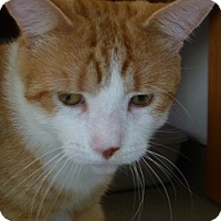 Adopt A Pet :: Handsome Howard - Hamburg, NY