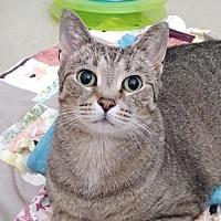 Adopt A Pet :: Cleocatra - Howell, MI
