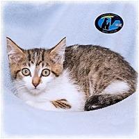 Adopt A Pet :: Essex - Howell, MI