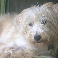 Adopt A Pet :: Sambuca - Woonsocket, RI