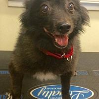 Adopt A Pet :: Boo - Oak Ridge, NJ