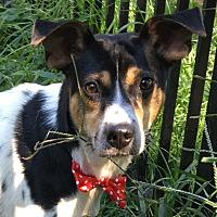 Adopt A Pet :: Jersey Boy - Princeton, KY