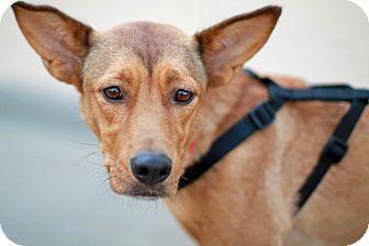 Collie/German Shepherd Dog Mix Dog for adoption in Marietta, Georgia - Baby