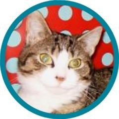 Domestic Shorthair Cat for adoption in Ithaca, New York - Sweetie AKA Tiarra 14057-c