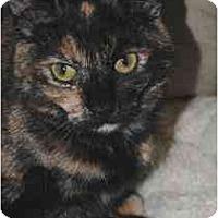 Adopt A Pet :: Sabrina - Marietta, GA