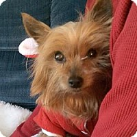 Adopt A Pet :: Lacy - Sheboygan, WI