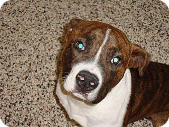 Pit Bull Terrier Mix Dog for adoption in Aiken, South Carolina - yoshi