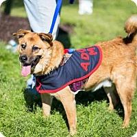 Adopt A Pet :: Petey (See Video) - Munford, TN