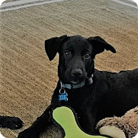 Adopt A Pet :: Dusty - Middlesex, NJ