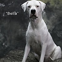 Adopt A Pet :: Bella - Acton, CA