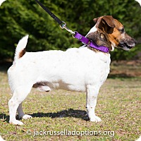 Adopt A Pet :: Pippin - Conyers, GA