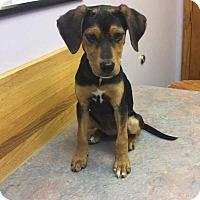 Adopt A Pet :: Sassy - Rexford, NY