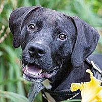 Adopt A Pet :: Keno - Pottstown, PA