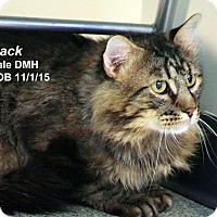 Adopt A Pet :: Mack - Lincoln, NE