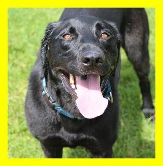 Labrador Retriever Mix Dog for adoption in Dodgeville, Wisconsin - Diana