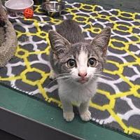 Adopt A Pet :: Nellie - Crocker, MO
