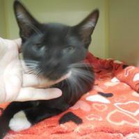 Adopt A Pet :: Bart - Morgan Hill, CA