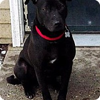 Adopt A Pet :: Trixie Rose, PENDING, in Maine - kennebunkport, ME