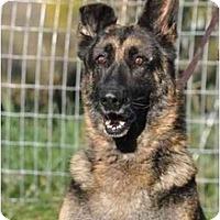 Adopt A Pet :: Clyde - Hamilton, MT