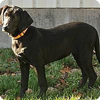 Adopt A Pet :: Beamer - Denver, CO
