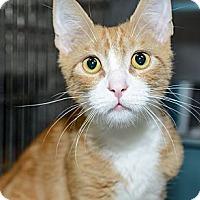 Adopt A Pet :: Felipe - New York, NY