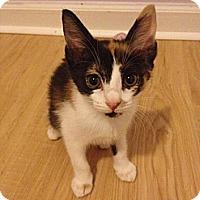 Adopt A Pet :: Maeve - Monroe, NC