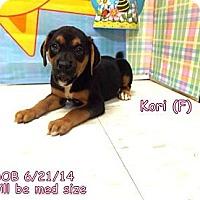 Adopt A Pet :: Kori - South Jersey, NJ