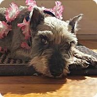 Adopt A Pet :: Elsa - Sunnyvale, CA