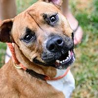 Adopt A Pet :: Suzy - Washington, DC