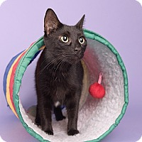Adopt A Pet :: Dusty - Wilmington, DE