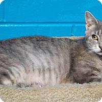 Adopt A Pet :: Telsa - Batavia, OH