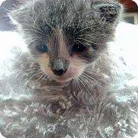Adopt A Pet :: Dorothy - Toms River, NJ