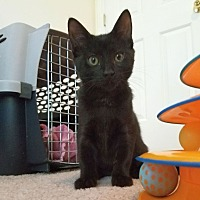 Adopt A Pet :: Bruce - Chattanooga, TN