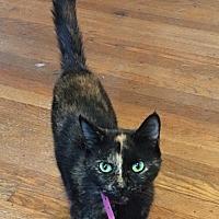 Adopt A Pet :: Stardust - Covington, KY