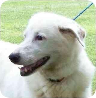 German Shepherd Dog Mix Dog for adoption in Lexington, Missouri - Taffy