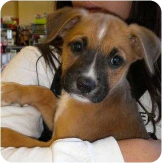 Terrier (Unknown Type, Medium) Mix Dog for adoption in Humble, Texas - Luna