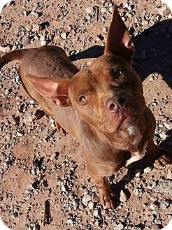 Staffordshire Bull Terrier Mix Dog for adoption in Alamogordo, New Mexico - Lexi