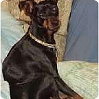 Adopt A Pet :: Schroeder - Columbus, OH