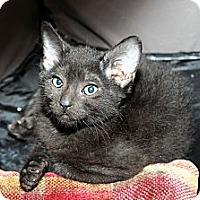 Adopt A Pet :: Phantom - Farmingdale, NY