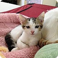 Adopt A Pet :: Parker - Monroe, GA
