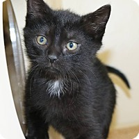Adopt A Pet :: Murray - Ann Arbor, MI