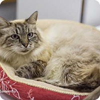 Adopt A Pet :: Samantha - Merrifield, VA