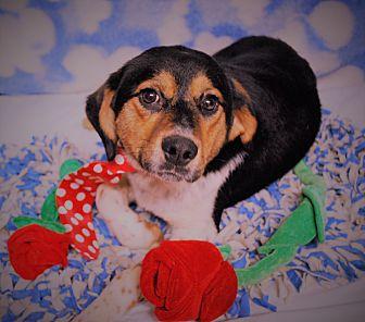 Hound (Unknown Type) Mix Dog for adoption in Waupaca, Wisconsin - Astro