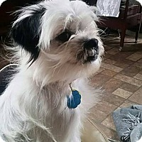 Adopt A Pet :: Bricktown NJ - Diva - New Jersey, NJ