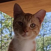 Adopt A Pet :: Manny - Lago Vista, TX