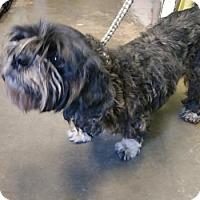 Adopt A Pet :: Flora - ADOPTED - Decatur, GA