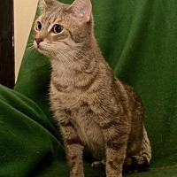 Adopt A Pet :: Sugar - Sanford, FL