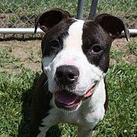 Adopt A Pet :: Sandy - Villa Park, IL