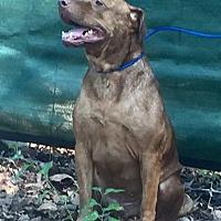 Adopt A Pet :: Hero - Demopolis, AL