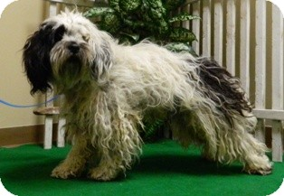 Terrier (Unknown Type, Small) Mix Dog for adoption in Columbus, Nebraska - Rigby